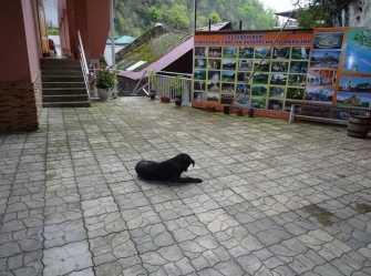 У Скалы мини-гостиница в Гаграх - Фото 2