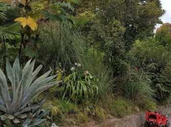 Макс гостевой дом в Сухуме - Фото 3