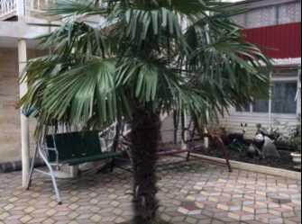 Бриз гостиница в Адлере - Фото 3