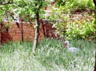 Аист дом под-ключ в Лазаревском