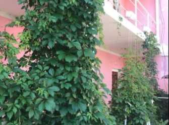 Гостевой дом в Прибрежном (Солнечная Долина)